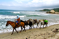 Horseback Riding in Tayrona National Park