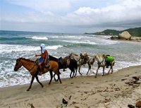 horse tours in tayrona national park santa marta colombia