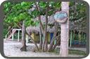 Palomino - La Sirena Hostel/Campground