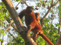 monkeys ecoparque besotes valledupar colombia.png